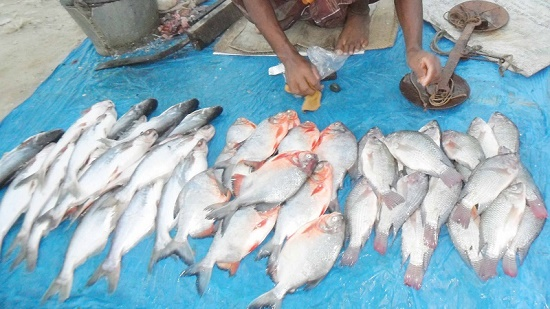 picture- fish-